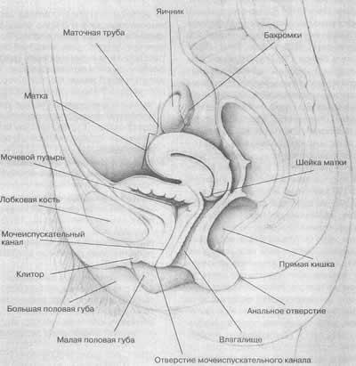 клитор и его функция