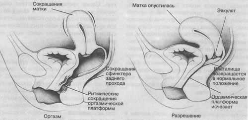 Изменения во влагалище во время секса