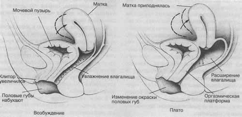 при занятием секса у женщины болит внутри-щт2