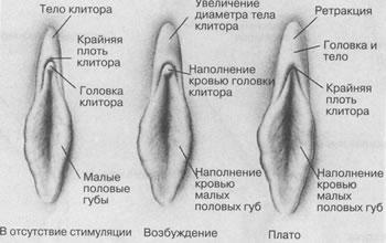 dami-dlya-seksa-hanti-mansiysk