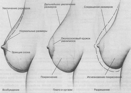 Жидкость во врдмя оргазма