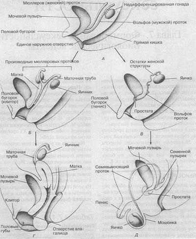 izvrashenniy-seks-s-zamenitelyami-muzhskogo-chlena-bolshie-zhopi-anal-porno-video-onlayn
