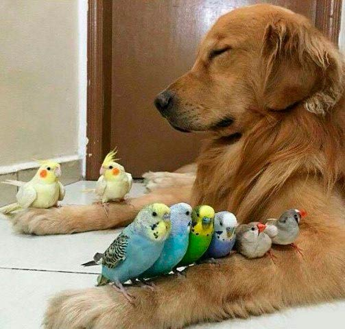 meditazia.jpg