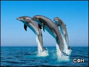 Дельфины образуют социальные сети
