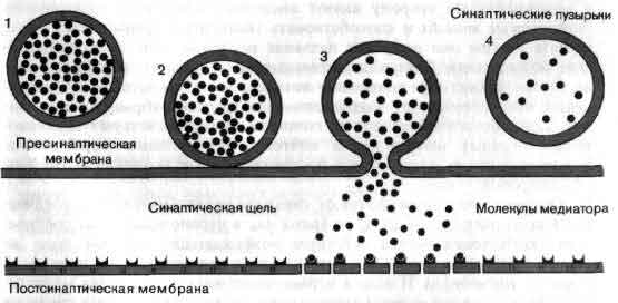 На схеме показаны