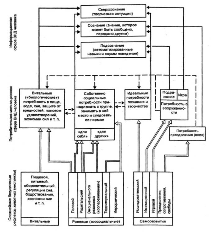 развития нервной системы