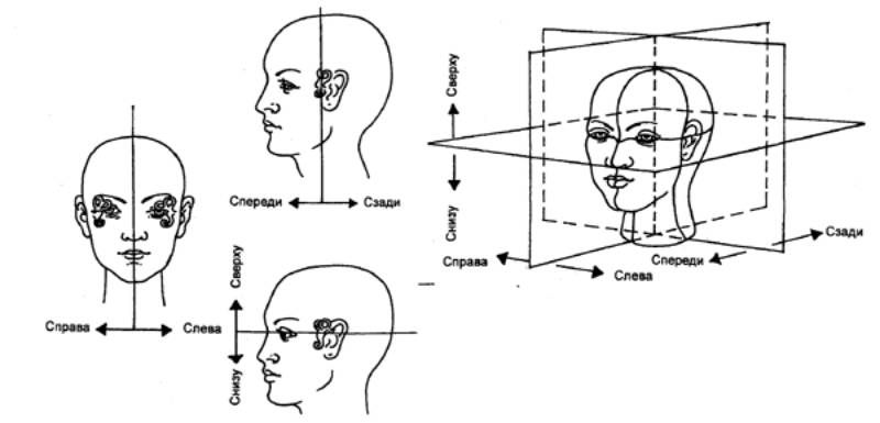Психофизиология: Этапы