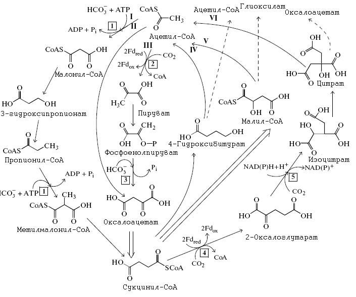 Относится к разделу Молекулярная биология.